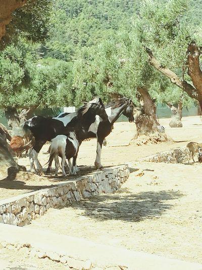 Zoosafari Puglia Famiglia Di Cavalli 43 Golden Moments