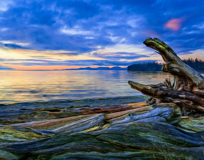 Animal Themes Animals In The Wild Beauty In Nature Close-up Cloud - Sky Day Fish Horizon Over Water Nature No People One Animal Outdoors Reptile Scenics Sea Sky Tranquility Tree Water