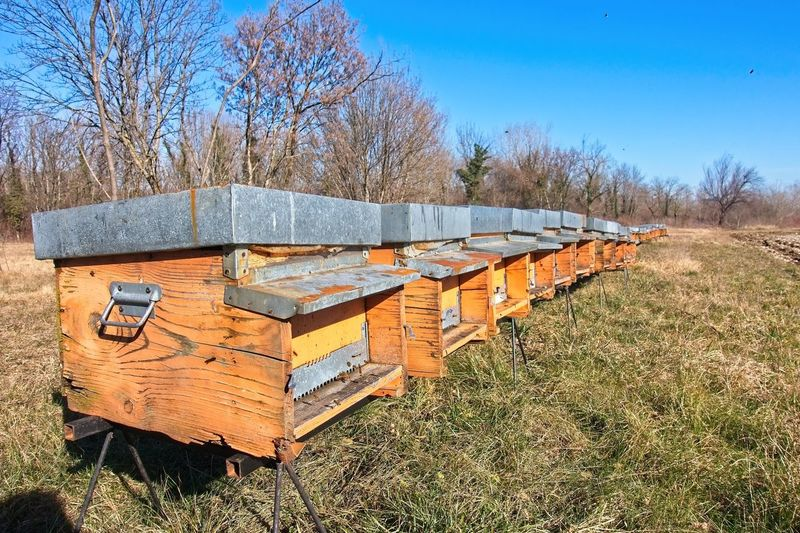 Bees in yellow bee hive on a sunny day. A row of bee hives in a field. Plant Field Grass Land Nature Tree Wood - Material APIculture Container Bee Sky No People Day Sunlight Beehive Box Land Vehicle Transportation Agriculture Outdoors Box - Container