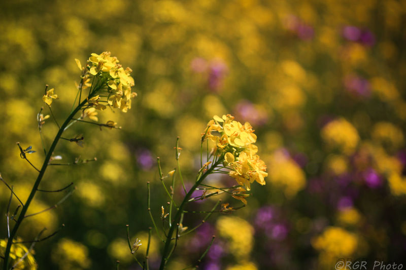 Beauty In Nature Check This Out Close-up Day EyeEm Gallery Flores Silvestres Flower Flower Head Focus On Foreground Fragility Freshness Growth Nature No People Outdoors Plant Yellow Yellow And Green Paint The Town Yellow