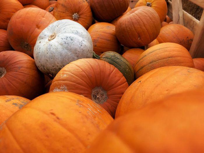 🎃 Autumn Pumpkin Pumpkinpatch October Cold Pumpkin Carving Pumpkinpicking