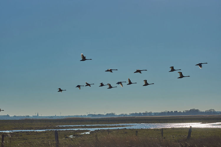 Birds flying over sea against clear sky