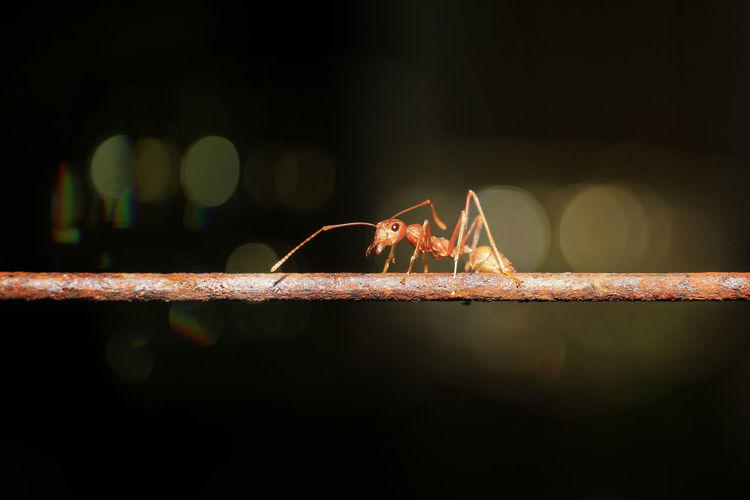 Ants walking on iron wire, blurry background, bokeh