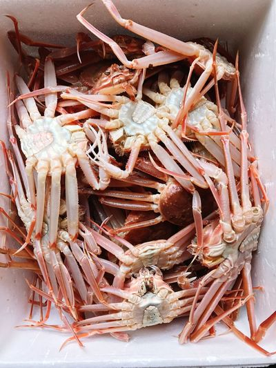 Close-up of crabs