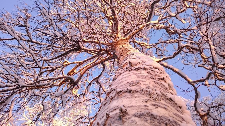 Snow Snowy Trees Winter Tree Low Angle View Nature Day Branch Outdoors No People Bare Tree Sky Beauty In Nature Growth Tree Trunk Close-up
