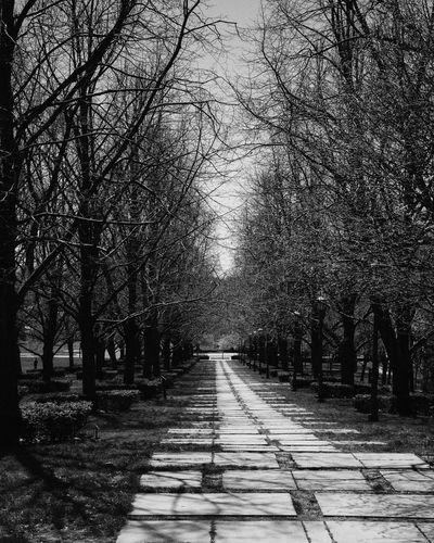 Long path Kansas City Kansas City Missouri  Nelson Atkins Museum Of Art Nelson Atkins Museum Blackandwhite Bw Bw_collection Bw_lover BW_photography Bws_worldwide Bw_society The Way Forward Tree Outdoors Day Nature No People Beauty In Nature