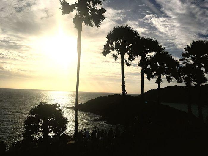 Tree Sea Palm