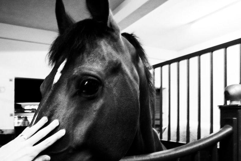 Animal Animal Body Part Animal Hair Day Farm Horse Part Of Portrait