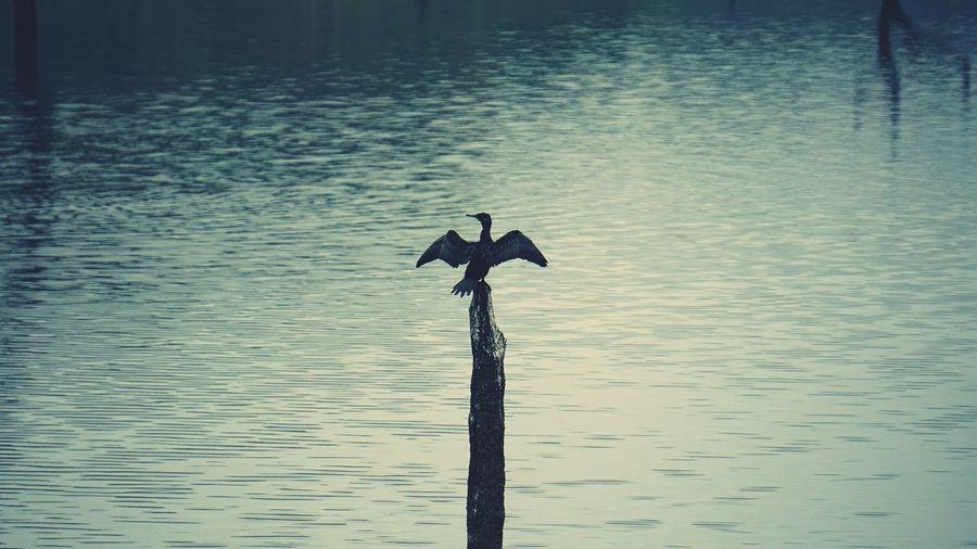 Bird Lake Water Bird