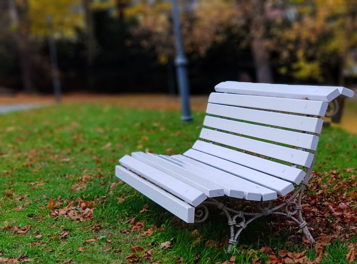 Grass Plant Seat Nature Park Day Focus On Foreground Absence Bench Land Park - Man Made Space Field Green Color Empty No People Outdoors Relaxation Growth Lawn Front Or Back Yard Park Bench