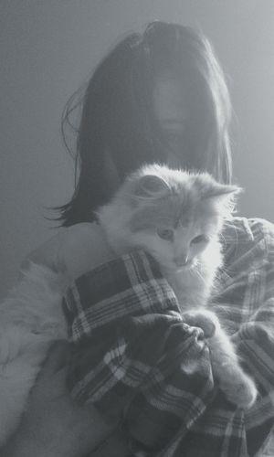 Cat Pets Animals GoodTimes Ukochana Koszula 👌 Hello World First Eyeem Photo
