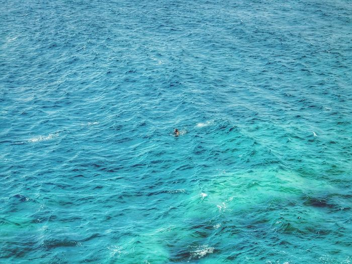 Neon Life Mediterranean  Sea Nature Blue Travel Swimming Beauty In Nature