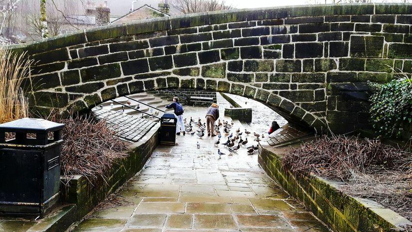 Bridge Path Ducks Feeding Ducks Yorkshire Path Pathway