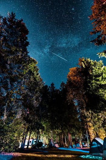 Tree Star - Space Night Nature Beauty In Nature Astronomy Growth Sky Galaxy Tranquility Star Field Milky Way Nautical Vessel Outdoors Scenics No People Constellation Low Angle View HUAWEI Photo Award: After Dark