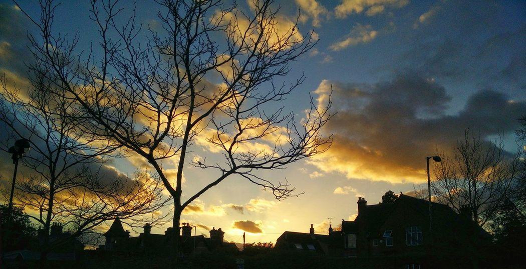 Sunset Photography Picsart Sunshine Treeart Clouds Sky Eyeem Photo Oneplus One Camera Oneplusone Oneplusphotograpgy