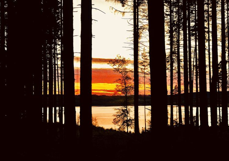 Silhouette trees by lake against sky at sunset