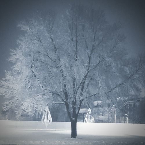Firstsnow2016 Firstsnowoftheseason Nature Tree Beauty In Nature Tranquility Bare Tree Scenics Landscape Single Tree Outdoors Tranquil Scene Winter Trees Wintry Trees Minnesotawinter Winterinminnesota Welcome To Black Lost In The Landscape