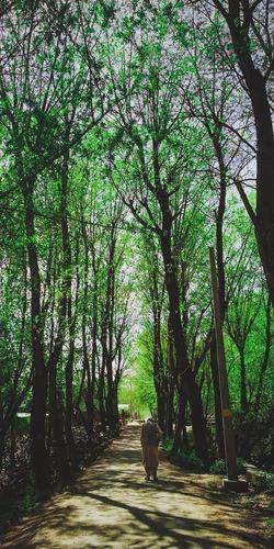 Green Lane Tree