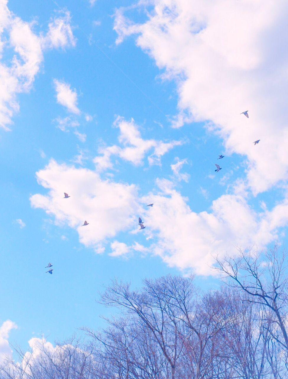 flying, bird, animal themes, animals in the wild, wildlife, mid-air, animal wildlife, one animal, spread wings, sky, flock of birds, low angle view, day, nature, cloud - sky, migrating, no people, seagull, outdoors, beauty in nature