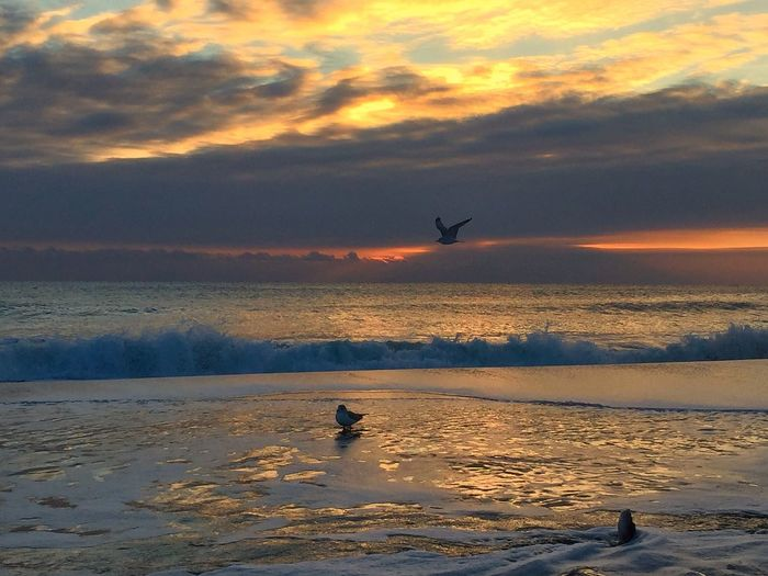 Bird flying over sea at sunset