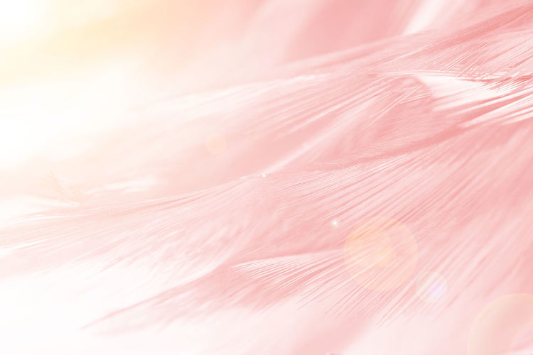 Pink Color Backgrounds Close-up Full Frame Pastel Colored Plant Textured  Beauty In Nature No People Extreme Close-up Softness Macro Flower Freshness Abstract Fragility Nature Vulnerability  Abstract Backgrounds Soft Focus