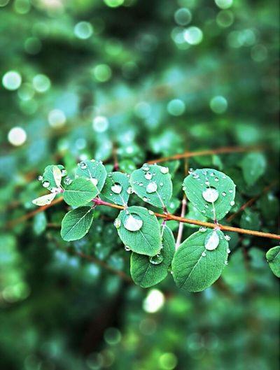 Beautifully Organized Nature Green Color Raindrops