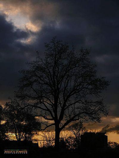 Tree at