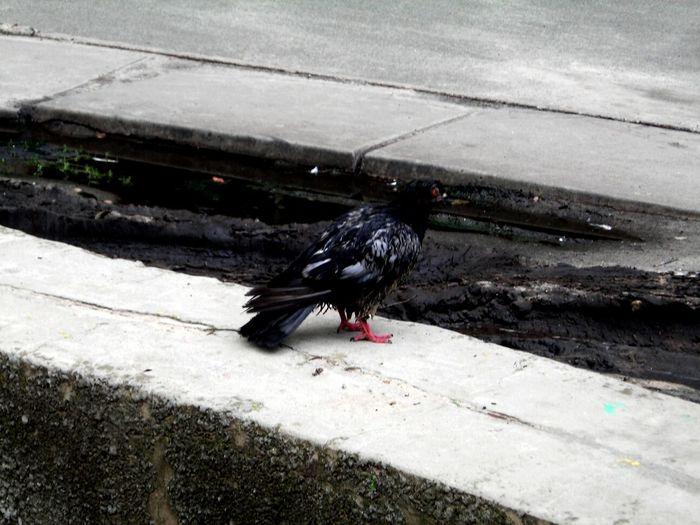 Bird Photography Streetphoto