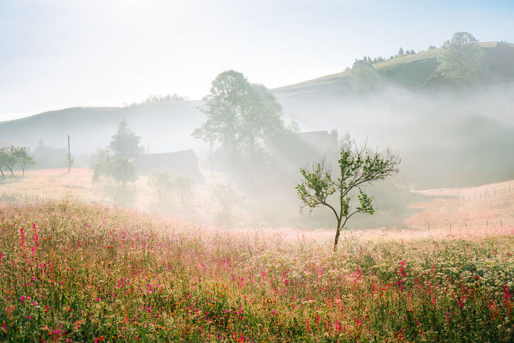 Scenic view of tree on field against misty hill and sky