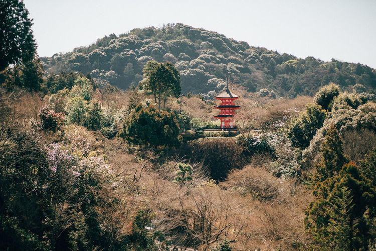 Architecture Built Structure Clear Sky Forest Kiyomizu-dera Mountain Mountain Range Scenics Tranquility Tree