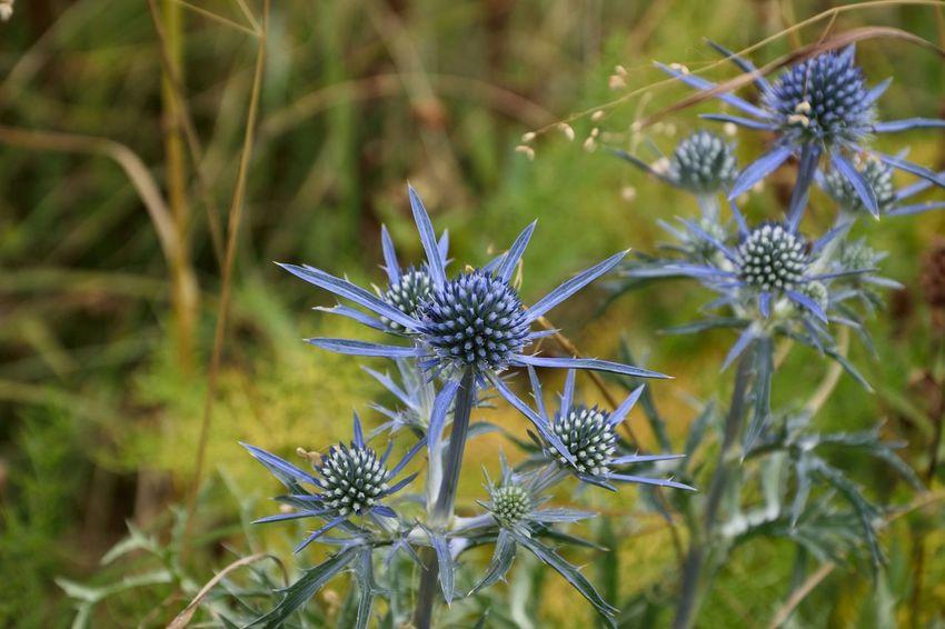 Dolci ma estremamente pungenti Flowers Honey Pungent Beauty Faedis Udine Friuli Venezia Giulia Italia