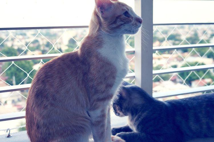 Bombonas mías ❣️ Domestic Animals Day EyeEm Looking Through Window Yellowcat Feline Cat Lovers Cats Love