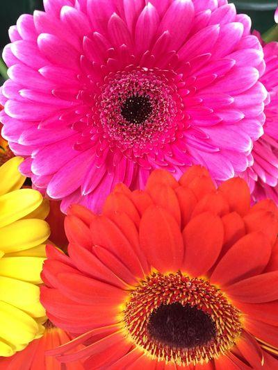 Flower Nature Yoursobeautiful EyeEm