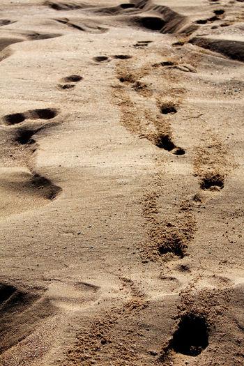 Barren Day Desert Dirt Escapism Footprints Nature Outdoors Remote Sand Shore