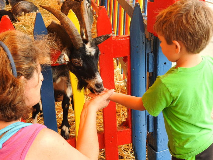 Feeding Animals Goat Goats Animal Themes Childhood Childhood Memories Childhoodmemories Children Photography Colorful Domestic Animals Family Fun Feeding Goats Fun For Kids Leisure Activity Livestock Mammal One Animal Outdoors People Petting Animals Petting Zoo Pettingfarm Pettingzoo Real People Teaching Children