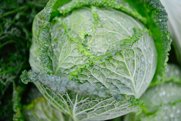 Savoy Cabbage Market Organic For Sale Market Stall Retail  Healthy Eating Food And Drink Food Green Color Wellbeing Vegetable Freshness Organic Water Raw Food Still Life Plant Part Close-up Leaf No People Cabbage Nature