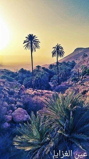 Beauty In Nature Growth Landscape Nature No People Palm Tree Sky Sunset Tree
