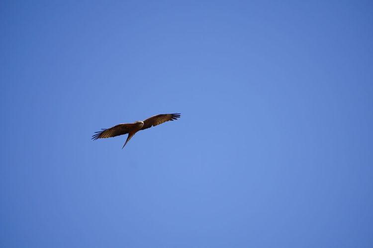 Flying Bird One
