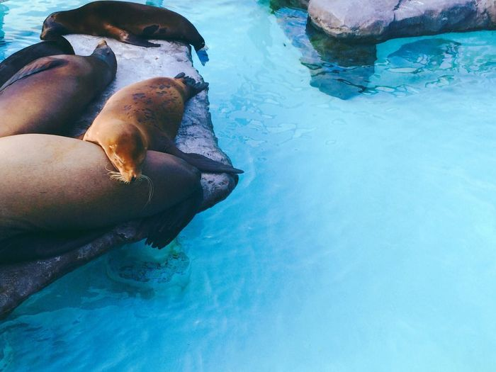 Chilling at the zoo with these guys. They wouldnt even spare me a glance, haha. Animals Zoo Seal Sleeping