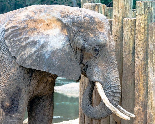 Side view of elephant by wooden fence at montgomery zoo