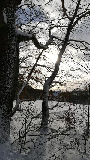 Day Tree Shadow Sunlight Branch No People Low Angle View Nature Outdoors Beauty In Nature Close-up Sky Shades Of Winter