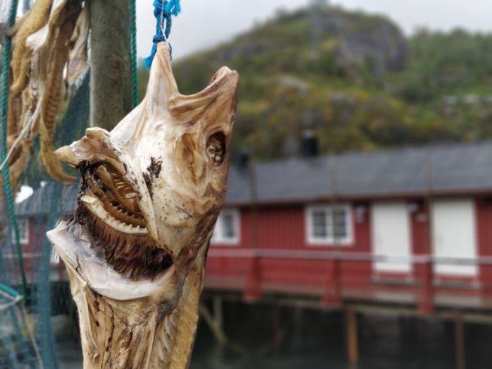 Close-up of fish hanging outdoors