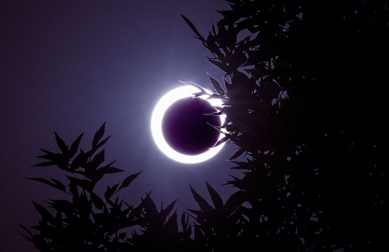 Low Angle View Of Silhouette Tree Against Annular Solar Eclipse In Sky At Night