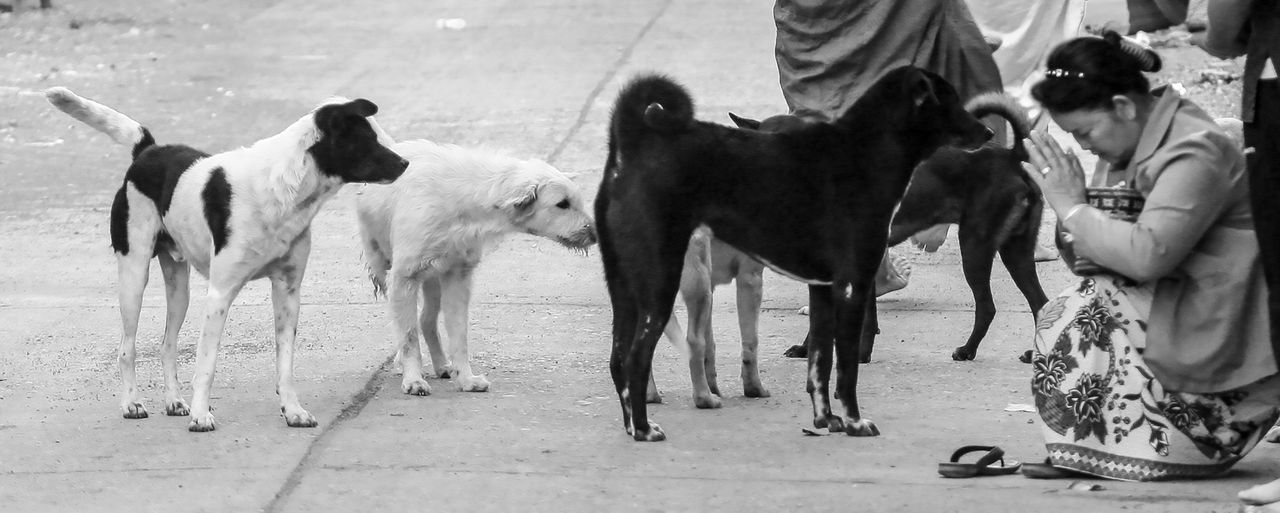 Holy dogs - Dogs control Thailand but our neighbour was waing to the monks on their morning alms round not to the dogs Dogs Thailand Alms Giving Animal Wildlife Day Dog Domestic Domestic Animals Group Of Animals Incidental People Livestock Low Section Mammal Medium Group Of Animals Monkey Outdoors People Pets Vertebrate The Photojournalist - 2018 EyeEm Awards Summer Road Tripping