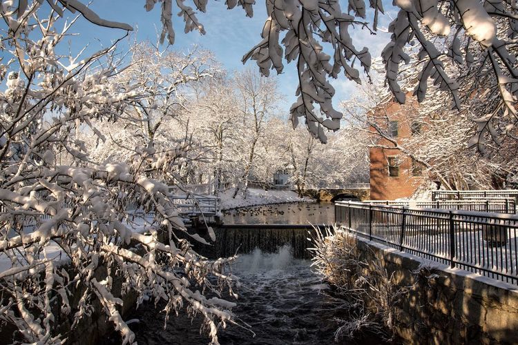 View of snowy trees with canal in winter