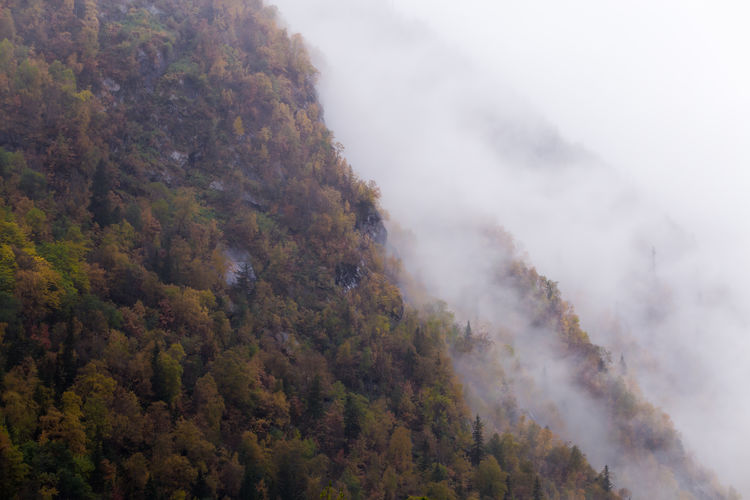Beauty In Nature Fog Forest Landscape Mountain Nature Outdoors Scenics