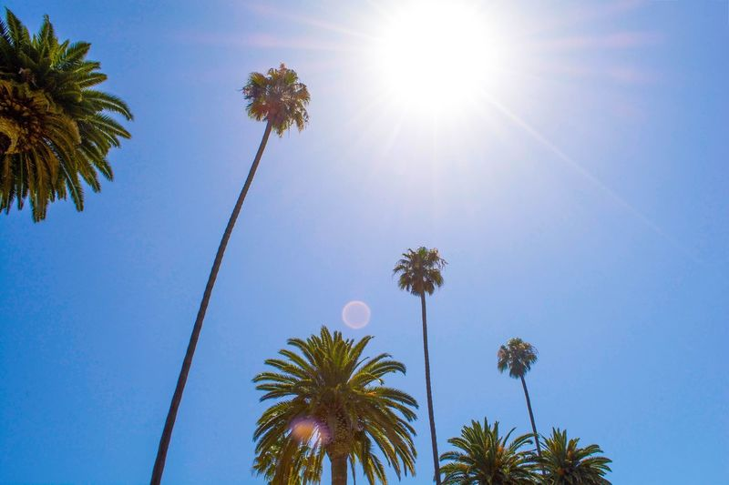 Low angle view of coconut palm trees against blue sky on sunny day