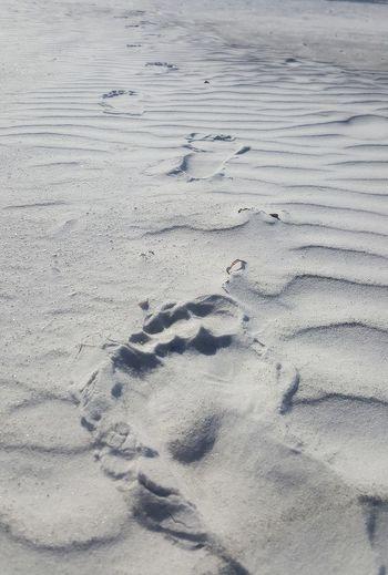 Foot prints on