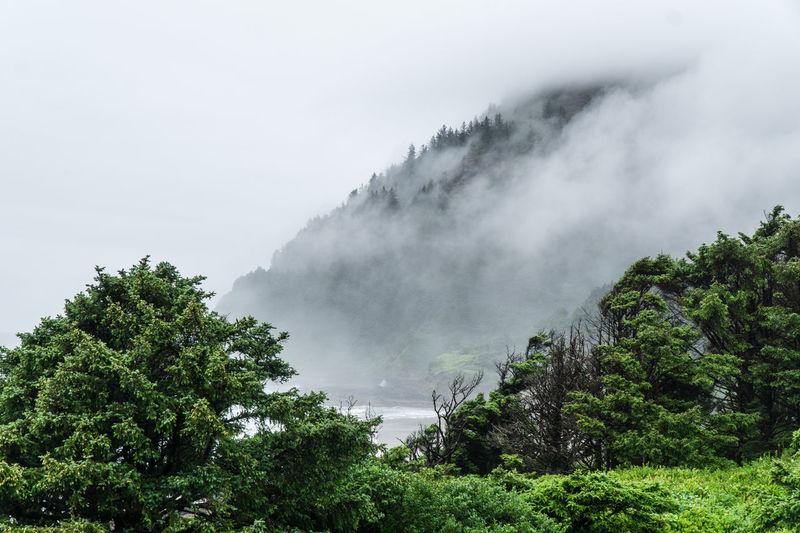 Cape Perpetua shrouded in morning fog along Oregon central coast Beauty In Nature Cape Perpetua Coastline Day Fog Green Color Growth Nature No People Oregon Oregon Coast Oregonexplored Outdoors Scenics Sky Tree