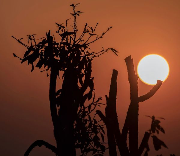 Another sunset Sunset Beauty In Nature Silhouette Low Angle View Nature Growth Orange Color Tree Sun Branch No People Sky Outdoors